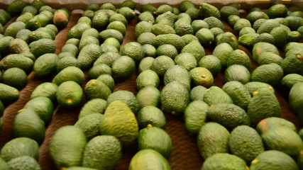 Avocados hass in packaging industrial line