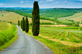 Vineyard Hills and Cypresses - 68526880