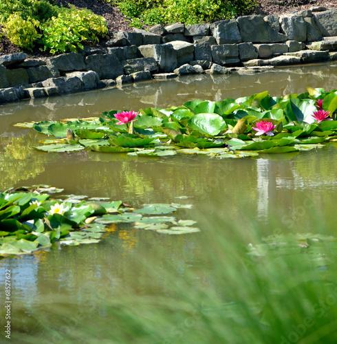 Foto op Canvas Tuin In the garden
