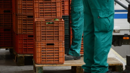 Unloading manually boxes of avocado