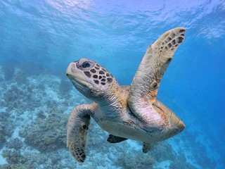 High Five, Pick me, sea turtle