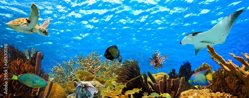 Leinwanddruck Bild underwater panorama of a tropical reef in the caribbean