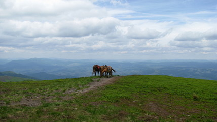 Horses in the Mountains2