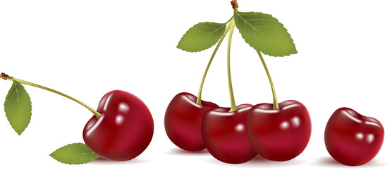 Vector cherry isolated on white background