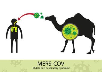 MERS Corona Virus transfer from camel to human