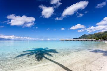 Palma su una spiaggia bianca in Polinesia francese