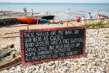 Oyster shell chalkboard sign in Whitstable