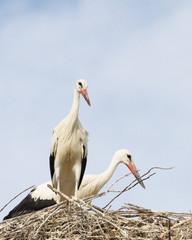 Spain, Storks Nest