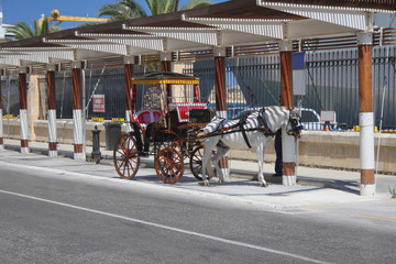Cab horse. Valletta, Malta