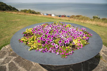 Flowers in a huge pot on Tankerton slopes in Whitstable.