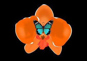 Orquídea y mariposa