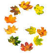 Letter G composed of autumn maple leafs