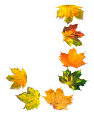 Letter J composed of autumn maple leafs