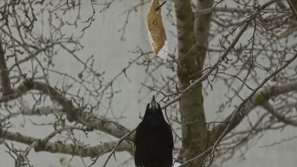 Crow Attacks 2