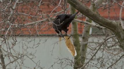 Crow Attacks 3