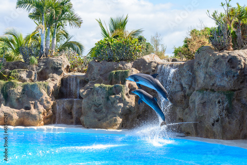 Tuinposter Dolfijn Dolphins