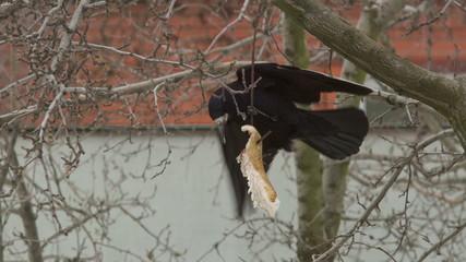 Crow Attacks 4