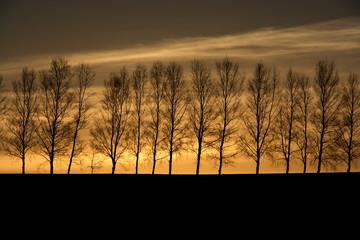 夕焼けと並木