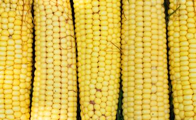 Texture - yellow cobs fresh corn