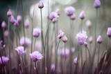 Fototapeta Flowering chives