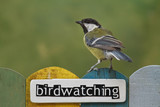 Bird perched on a fence decorated with the word birdwatching poster