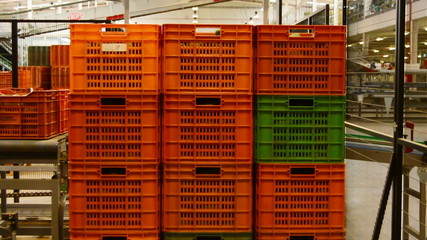 Boxes avocados, packaging line