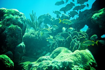 Coral Reef, tropical fish and ocean life in the caribbean sea