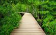 Path to the jungle,Trang,Thailand