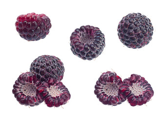 Cumberland black raspberry