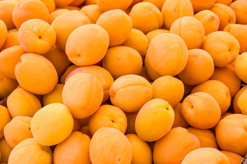Bright yellow apricots on display
