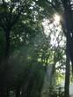 canvas print picture - Sonnenstrahl im Wald hinein