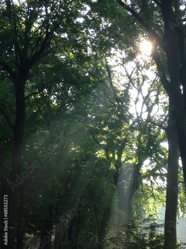 canvas print picture Sonnenstrahl im Wald hinein