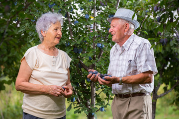 Senior Couple of man and woman in orchard