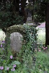 Historischer Friedhof Nienhagen (Detmold)