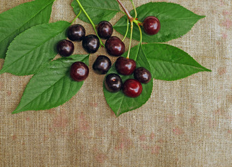 Ripe cherry on the rough fabric as the background