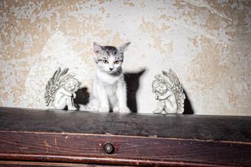 Engel mit der Katze