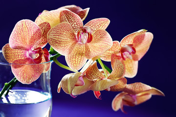 Purple orchid flowers in a glass vase.  Floral background .