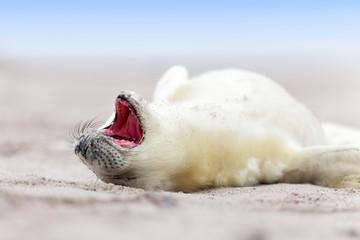 Wildlife - Robbenbaby