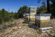 Obrazy na płótnie, fototapety, zdjęcia, fotoobrazy drukowane : Honeycomb crates on nature surrounded by vegetation.