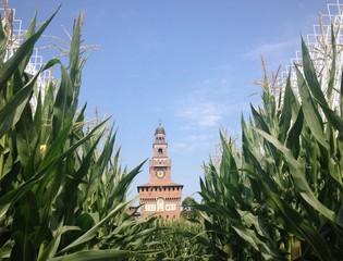 Milano il Castello Sforzesco in un campo di mais