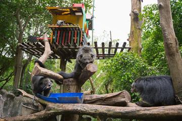 Три бунтуронга сидят на дереве в вольере и кушают