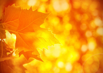 Autumnal foliage background