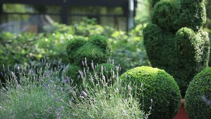 topiary in the Regular garden