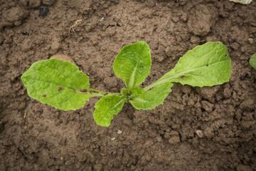 new plants grow in organic garden.