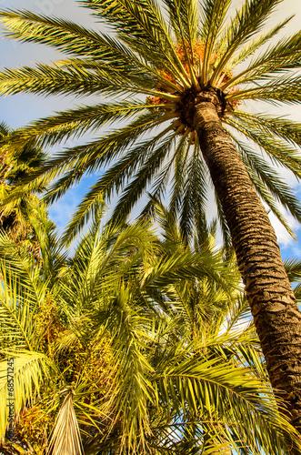 canvas print picture Palmen an Uferpromendade in Marbella Spanien