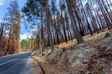 Bosco, Yosemite National Park