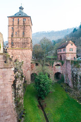 The tree in The ruin tower of Heidelberg castle in Heidelberg