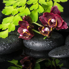 Beautiful spa concept of deep cherry orchid (phalaenopsis), gree