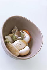 Shells in a porcelain bowl