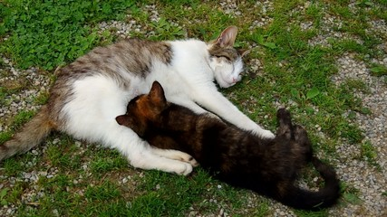 Cat and kitten resting on green grass